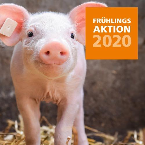 2020 Frühlingsaktion Schwein
