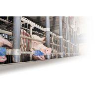 Beißrolle für Schweine #2